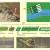 Obr. 1: Uspořádání experimentu: A: plocha přírodního vývoje vegetace B: pasti na zachytávání semen C: piezometr D: plocha s introdukovanými semenáčky E: síťové klíčidlo